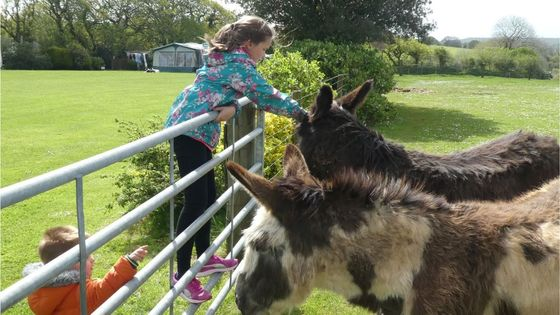 girl petting the donkeys